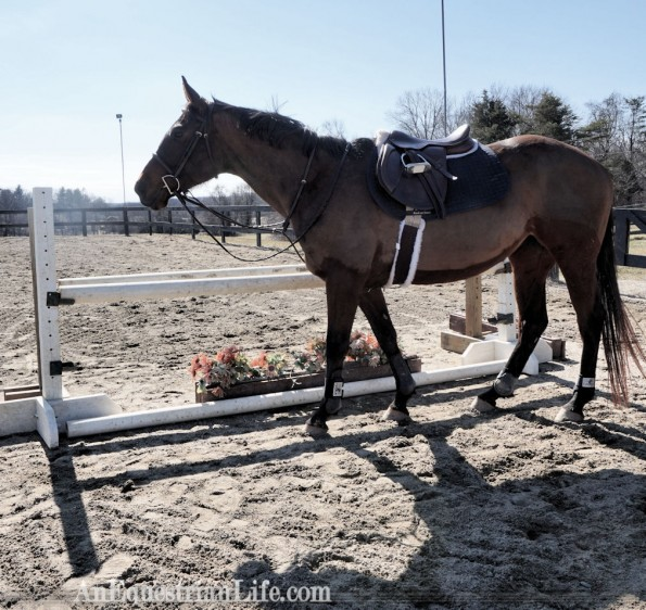 thoroughbred hunter oxer