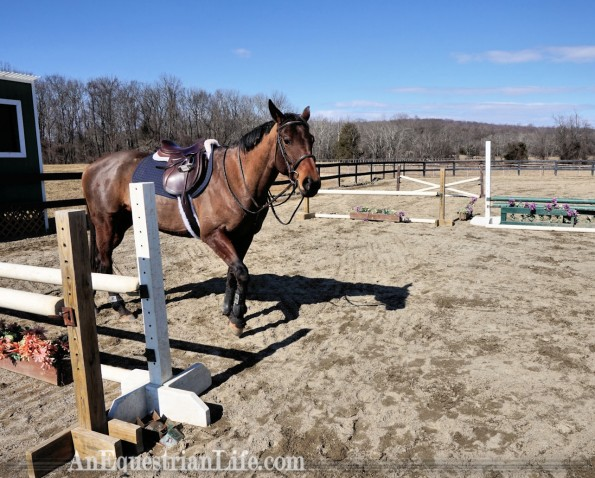 thoroughbred oxer
