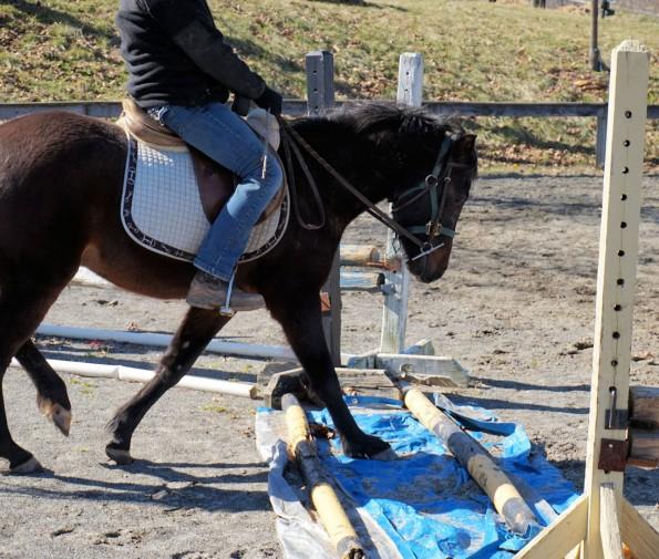 tarp pony