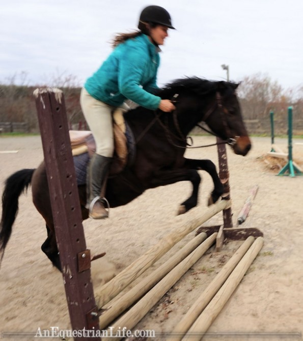 german riding pony jumping