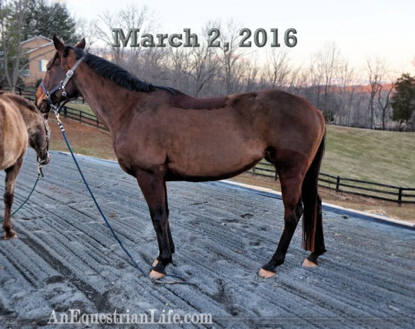 7 year old horse conformation