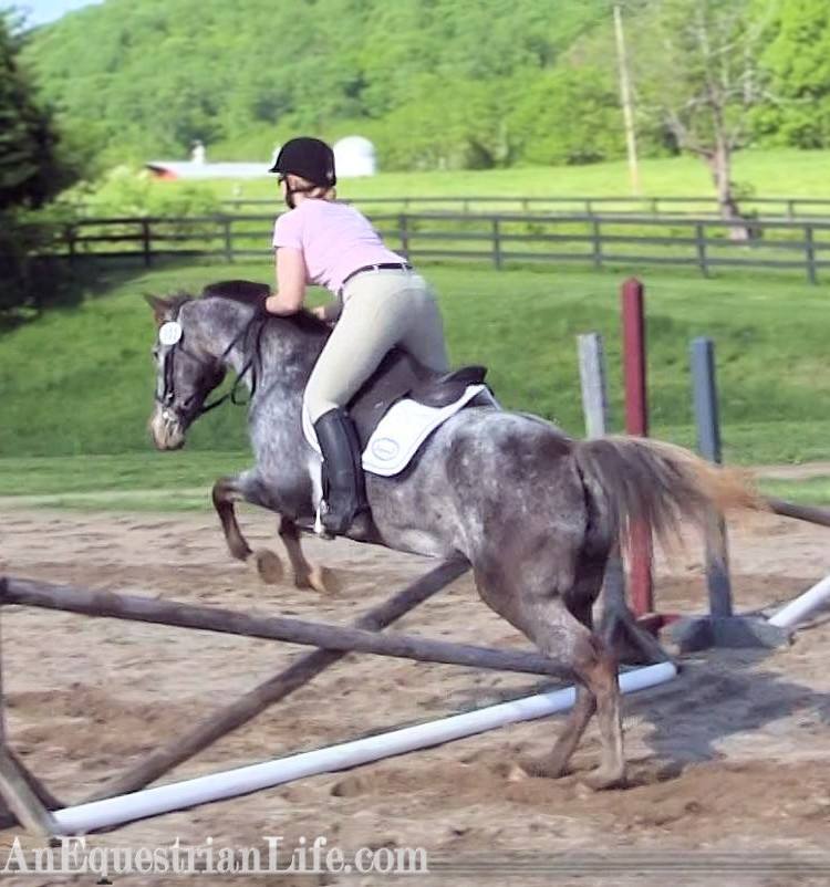 appaloosa jumping