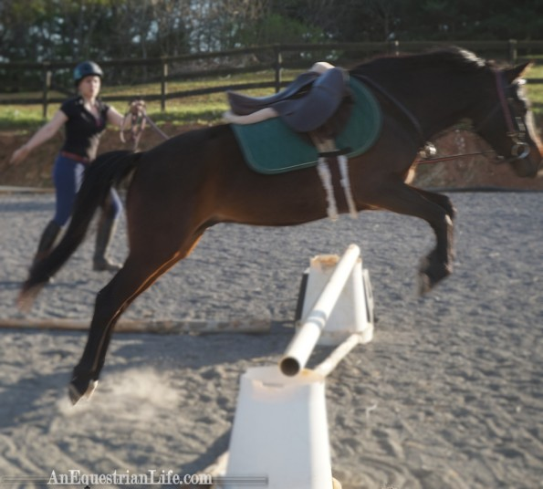 lunging over a jump