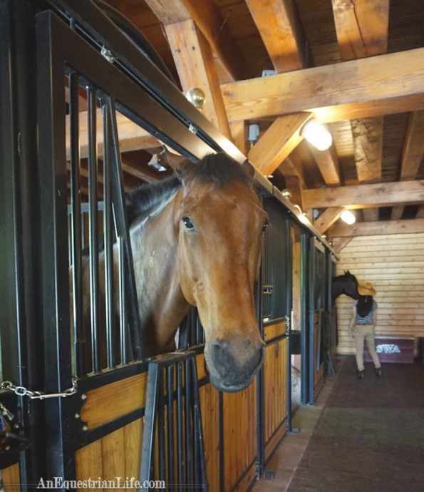 Gorgeous interior, I loved the exposed beams. Also, horse looks semi grouchy, but actually was quite friendly.