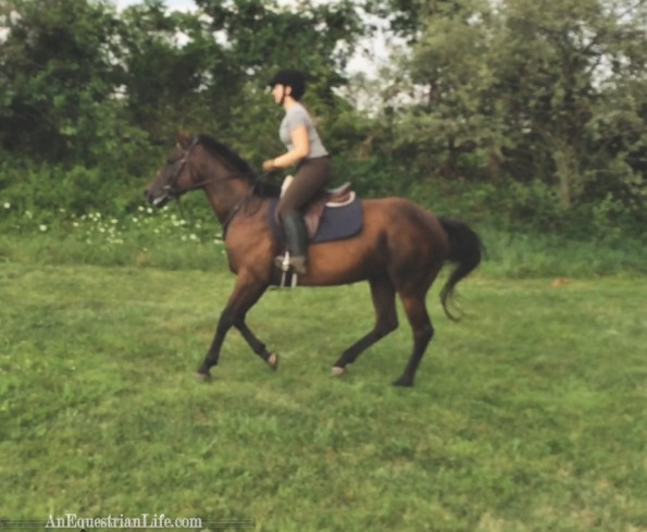 open field cantering