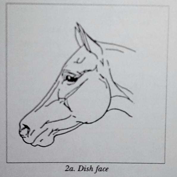 dishface