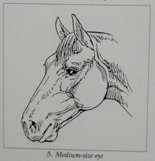 mediumeye