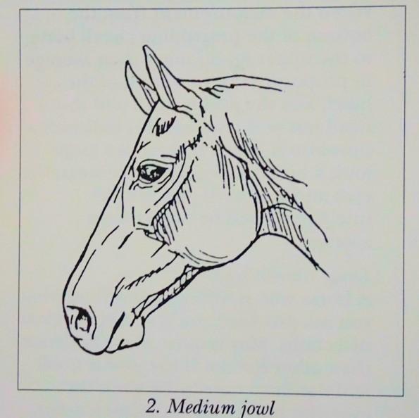 mediumjowl