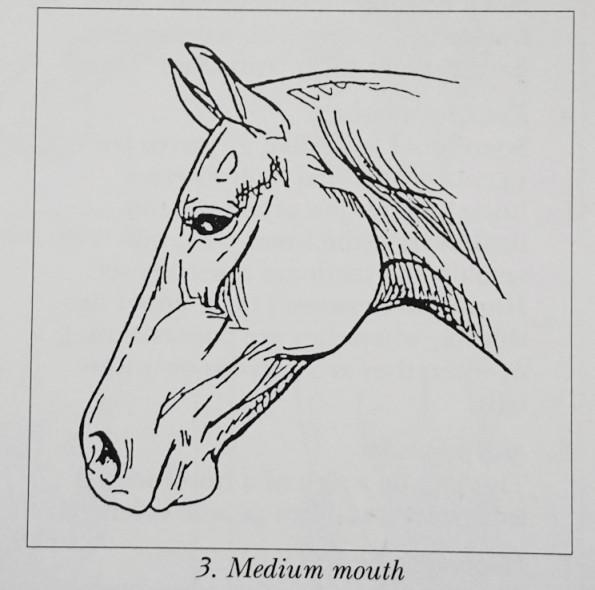 mediummouth