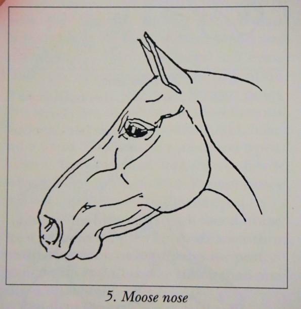 moosenose