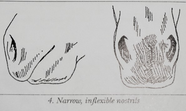 narrownostrils
