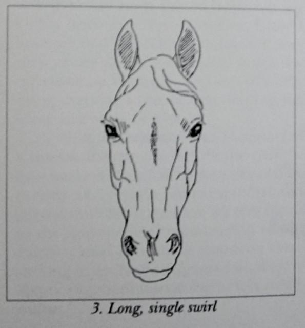 singlelongswirl