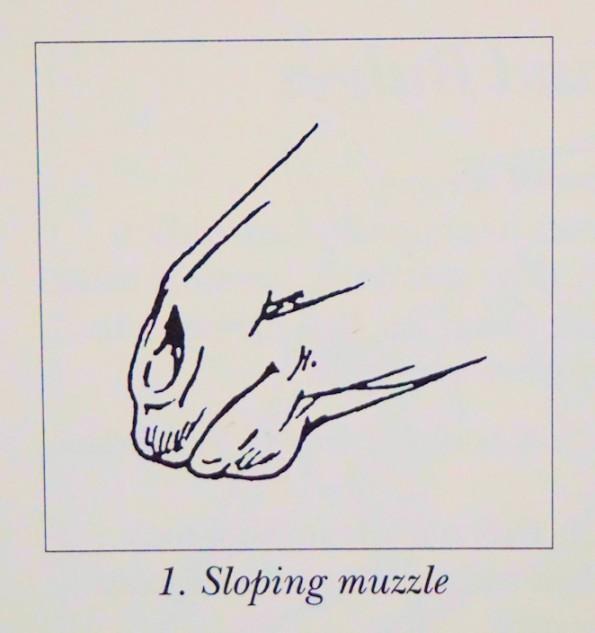 slopingmuzzle