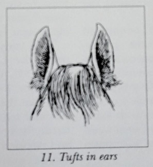 tuftsears