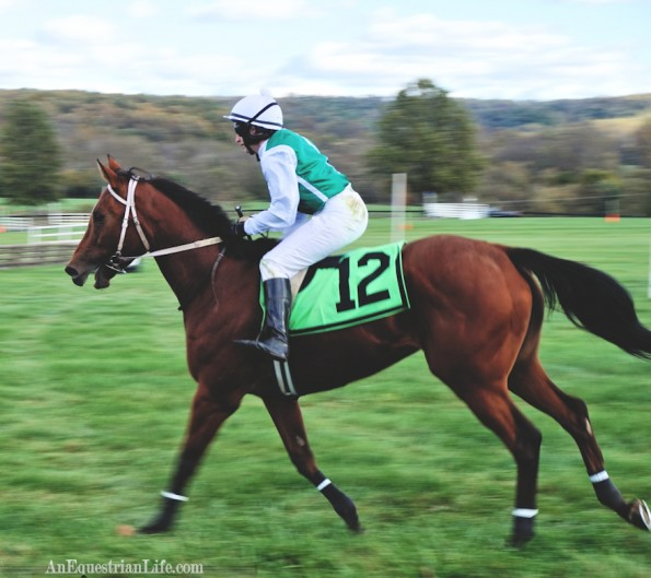 steeplechasehorse