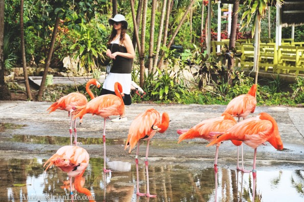 standing with flamingos