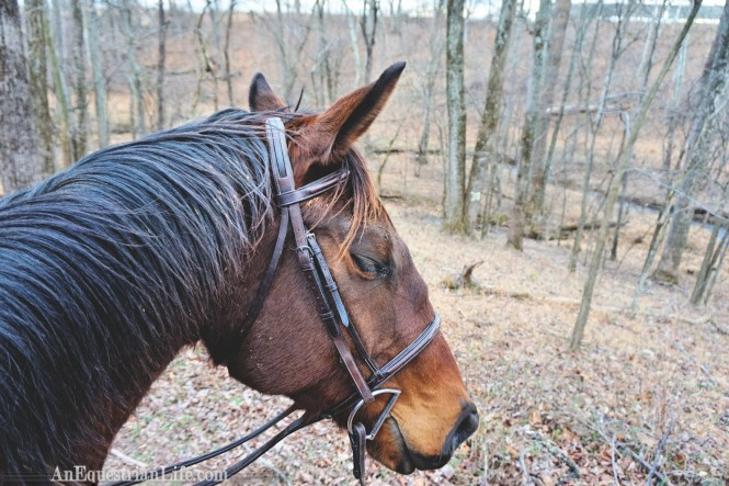 winter trail ride