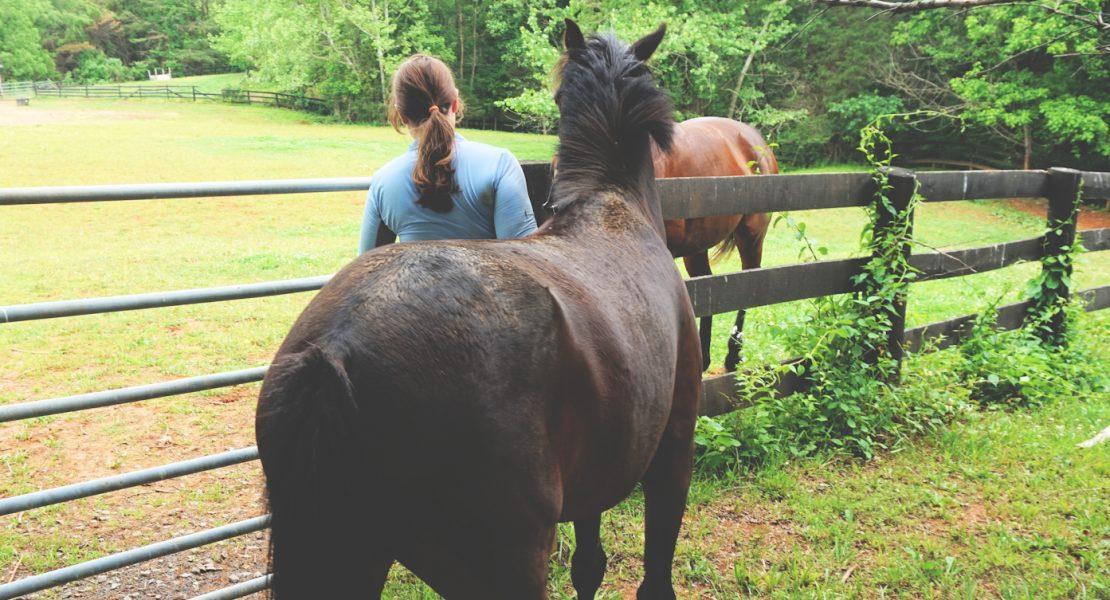 horse lifestyle