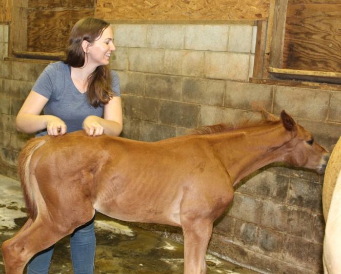 foal scratches