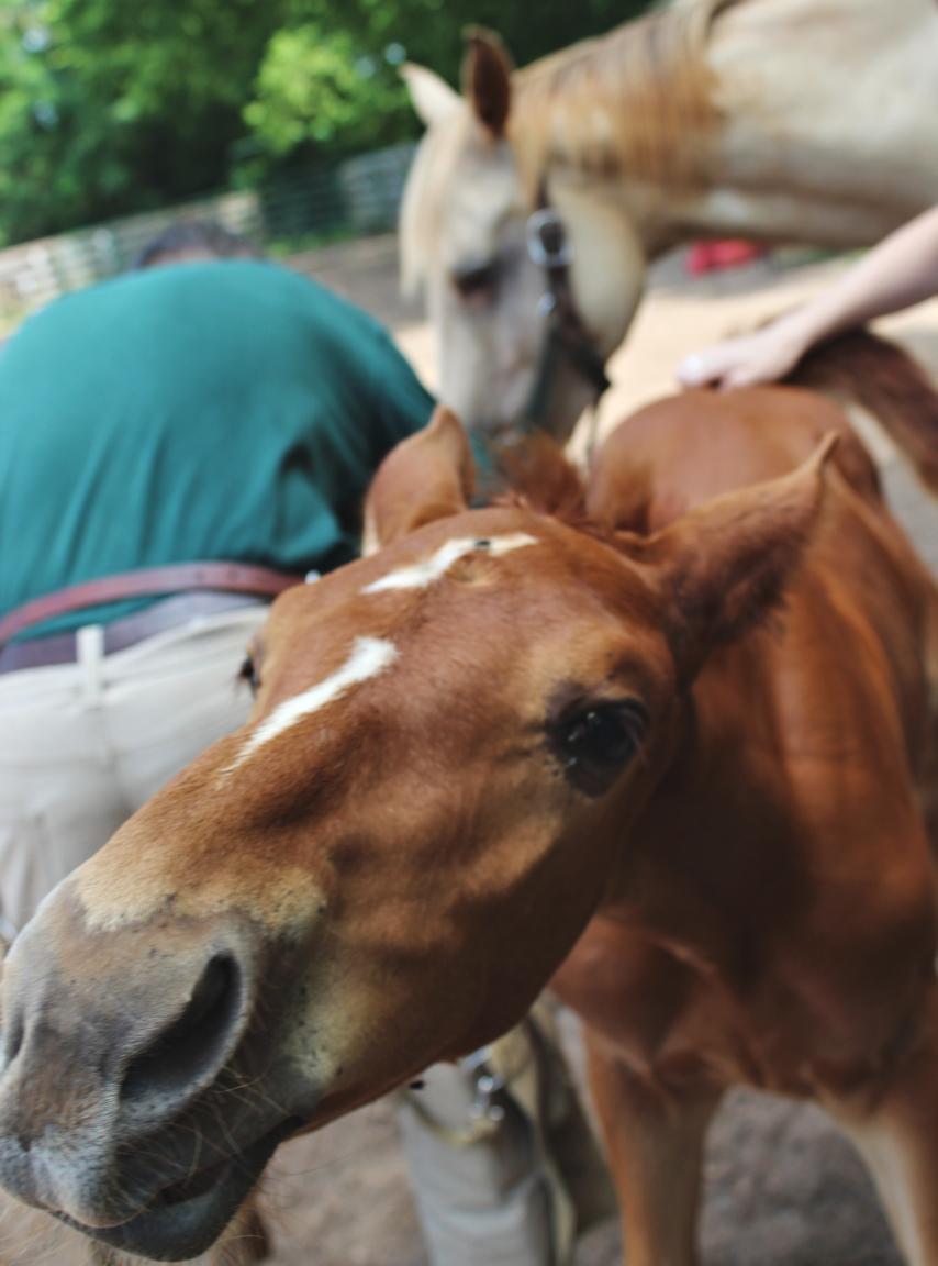 foal face