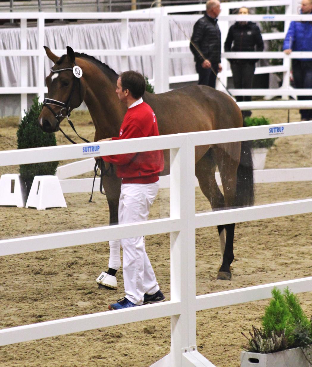 Westfalen stallion inspection