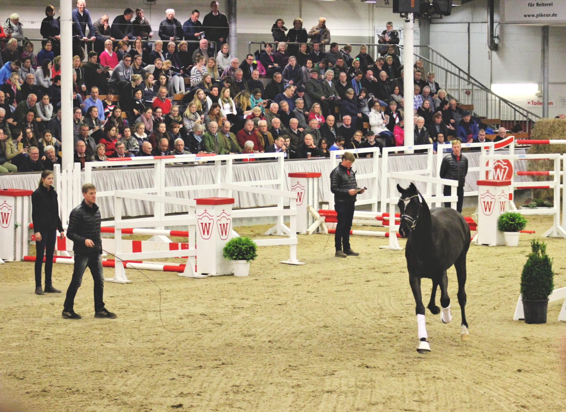 stallion inspection
