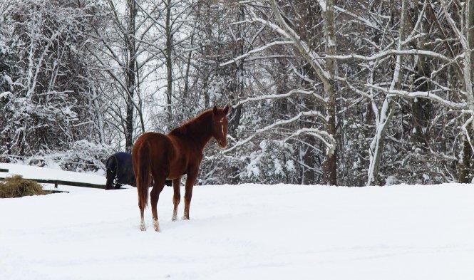 snowy horse pasture