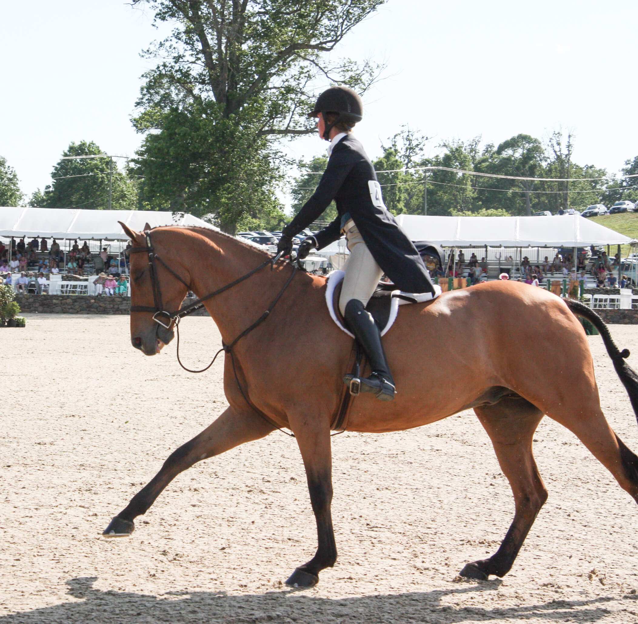 hunter horse cantering
