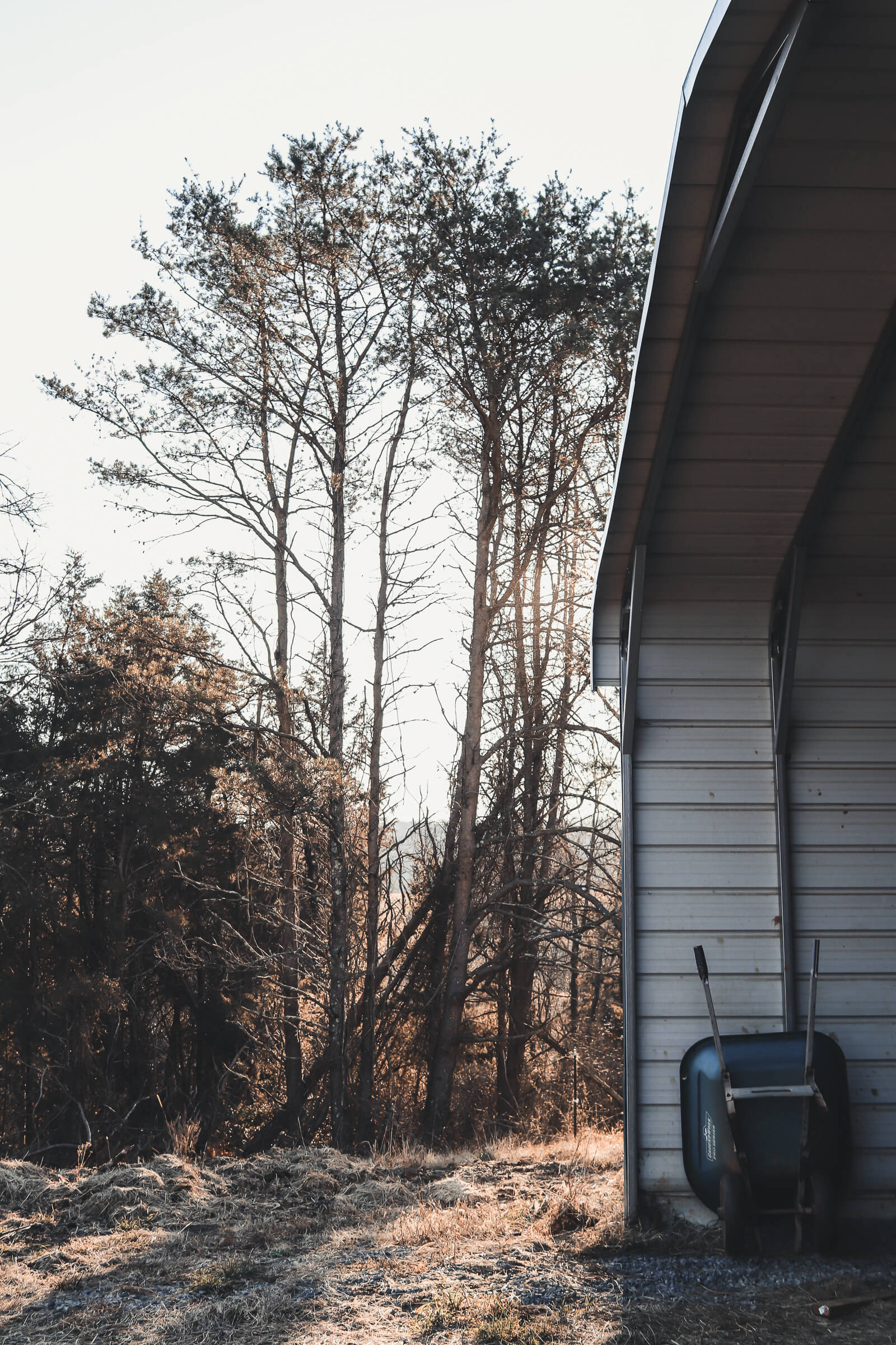 shed next to woods