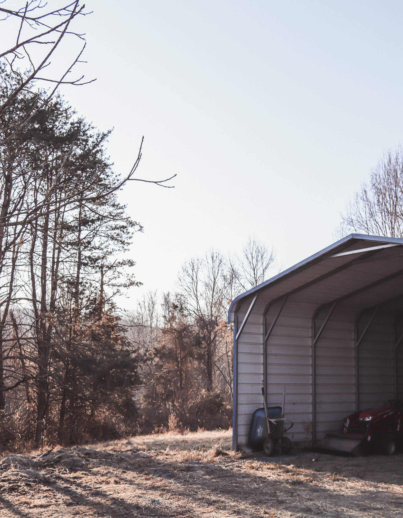 shed with trees