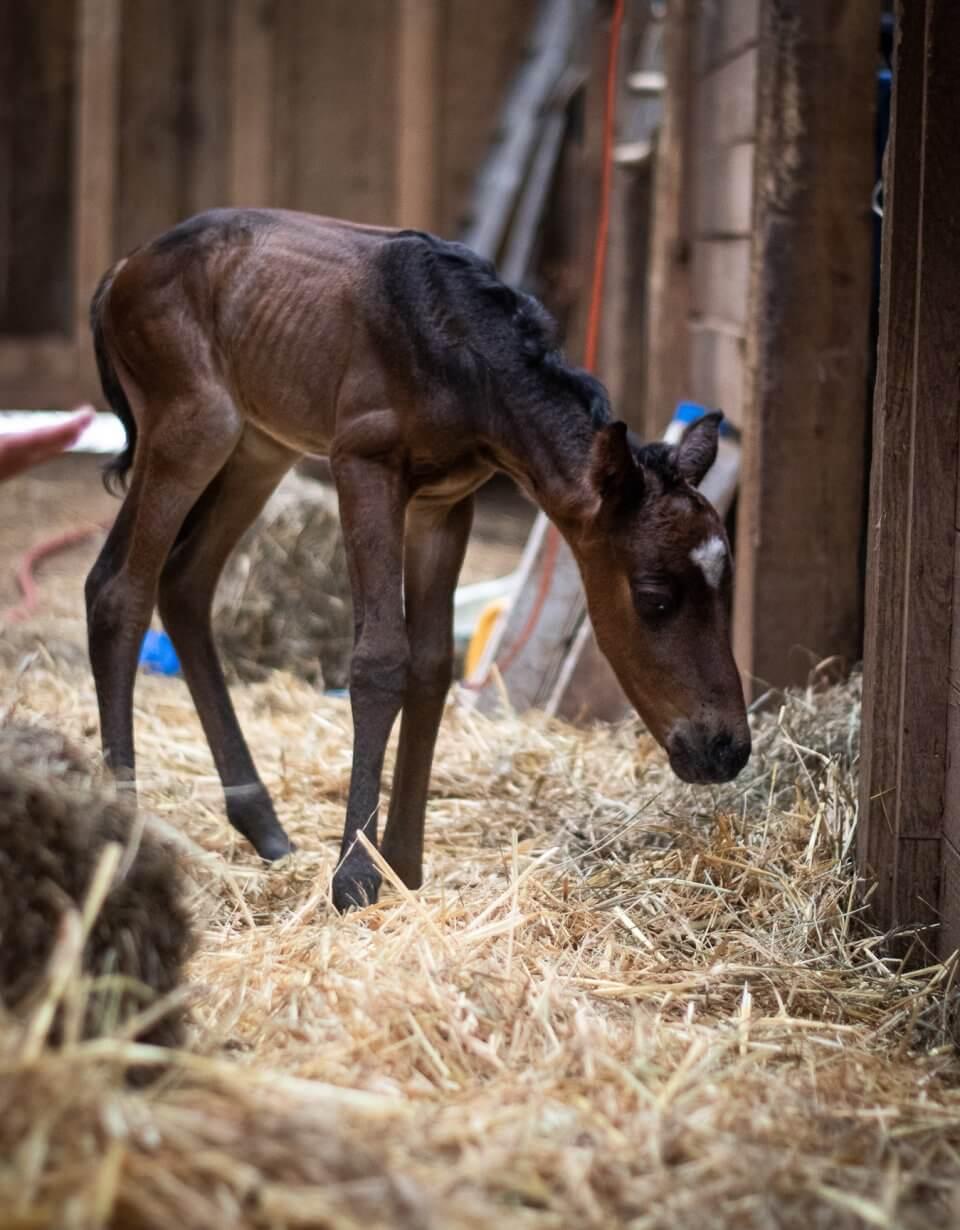 twin foal