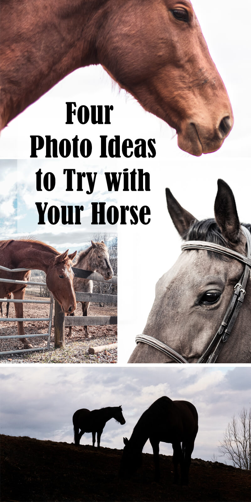 Pin for horse photo ideas
