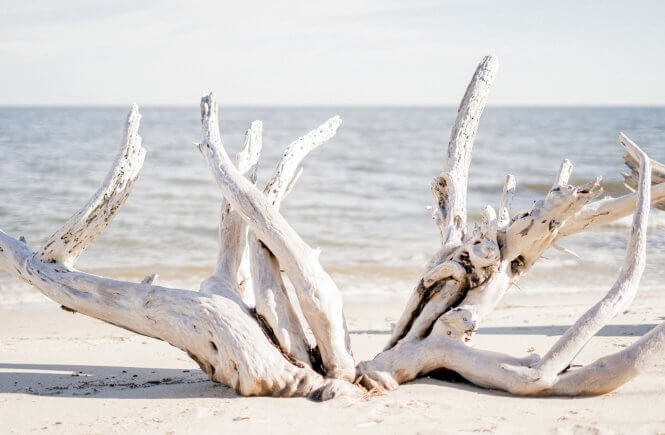 bleached driftwood on the beach